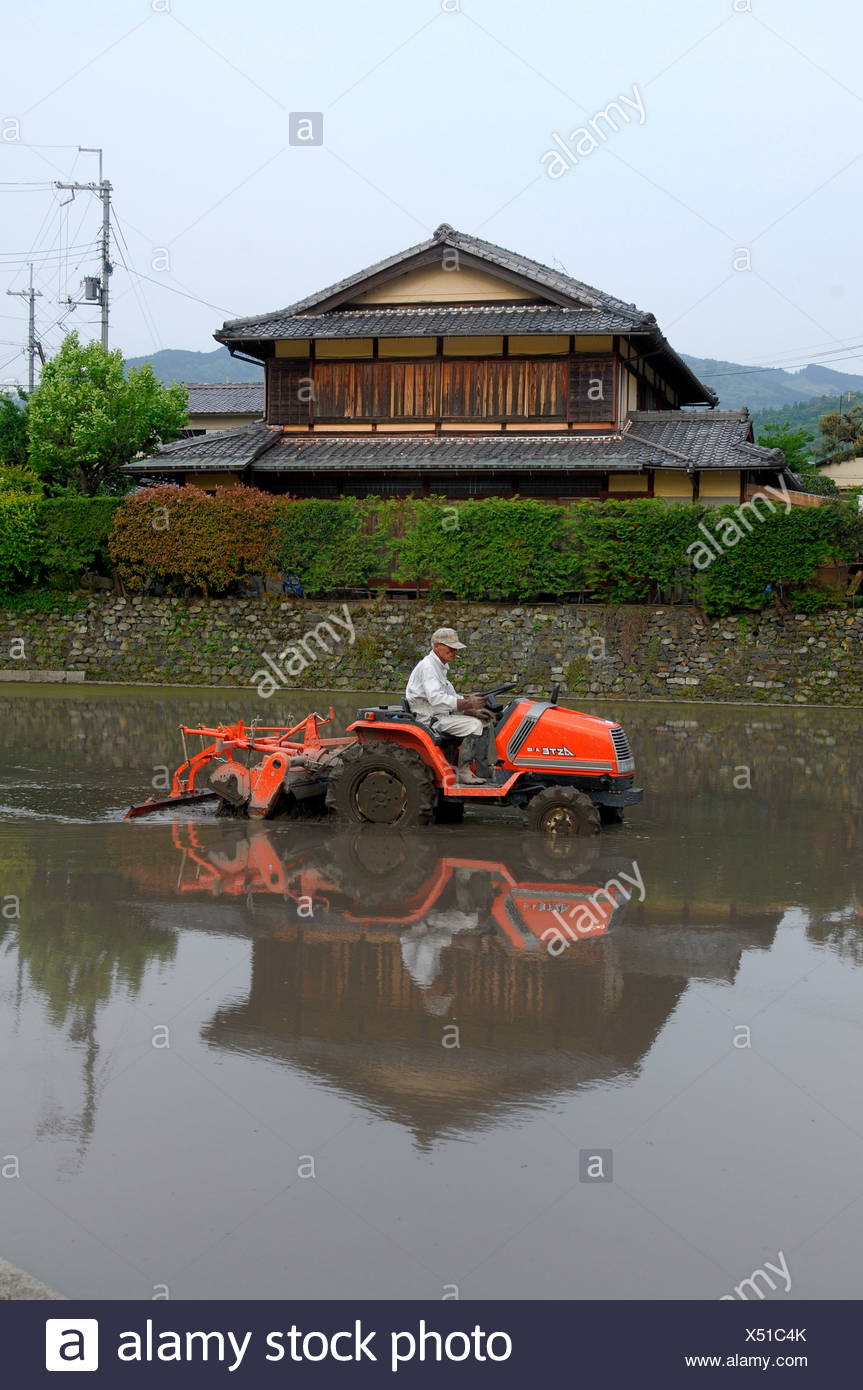 Rice farmer thatching his rice paddy, traditional farm house in the back, Iwakura, Kyoto, Japan, Asia - Stock Image
