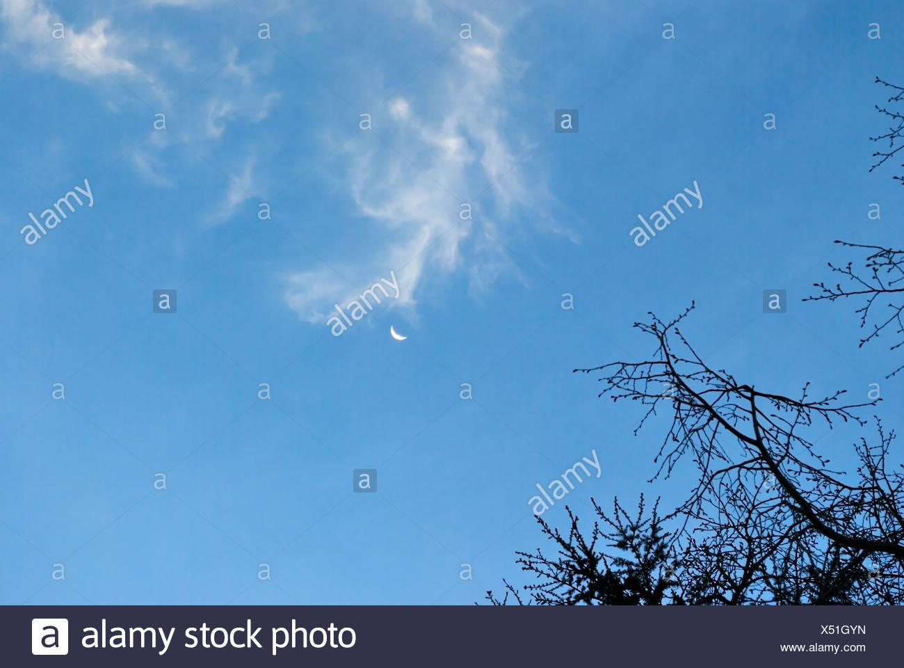 cloudscape with branch of tree. nature - Stock Image