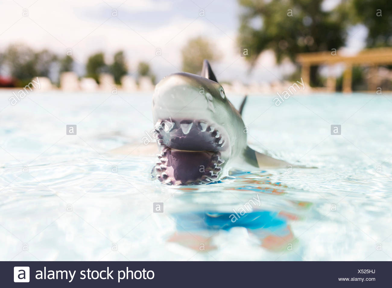 Pool Toy Stock Photos Amp Pool Toy Stock Images Alamy