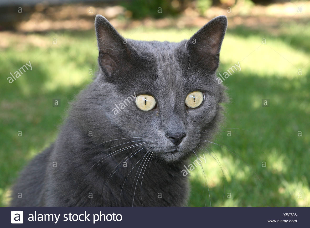 Cat gray garden sitting sees looks observes portrait animal