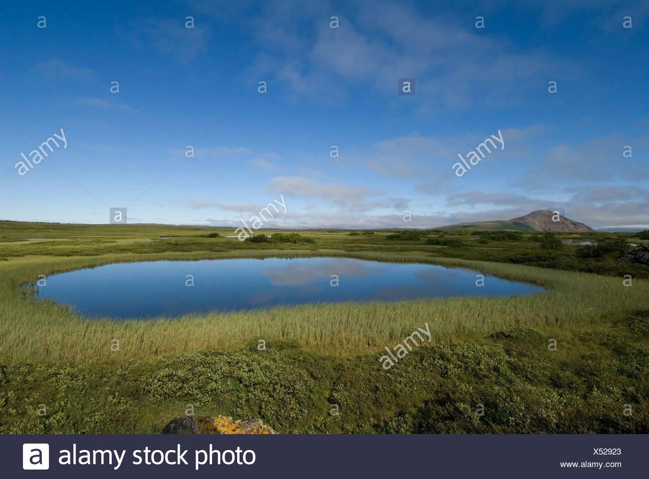 Hoogveenlandschap bij Myvatn op IJsland;Upland moor near Myvatn on Iceland - Stock Image