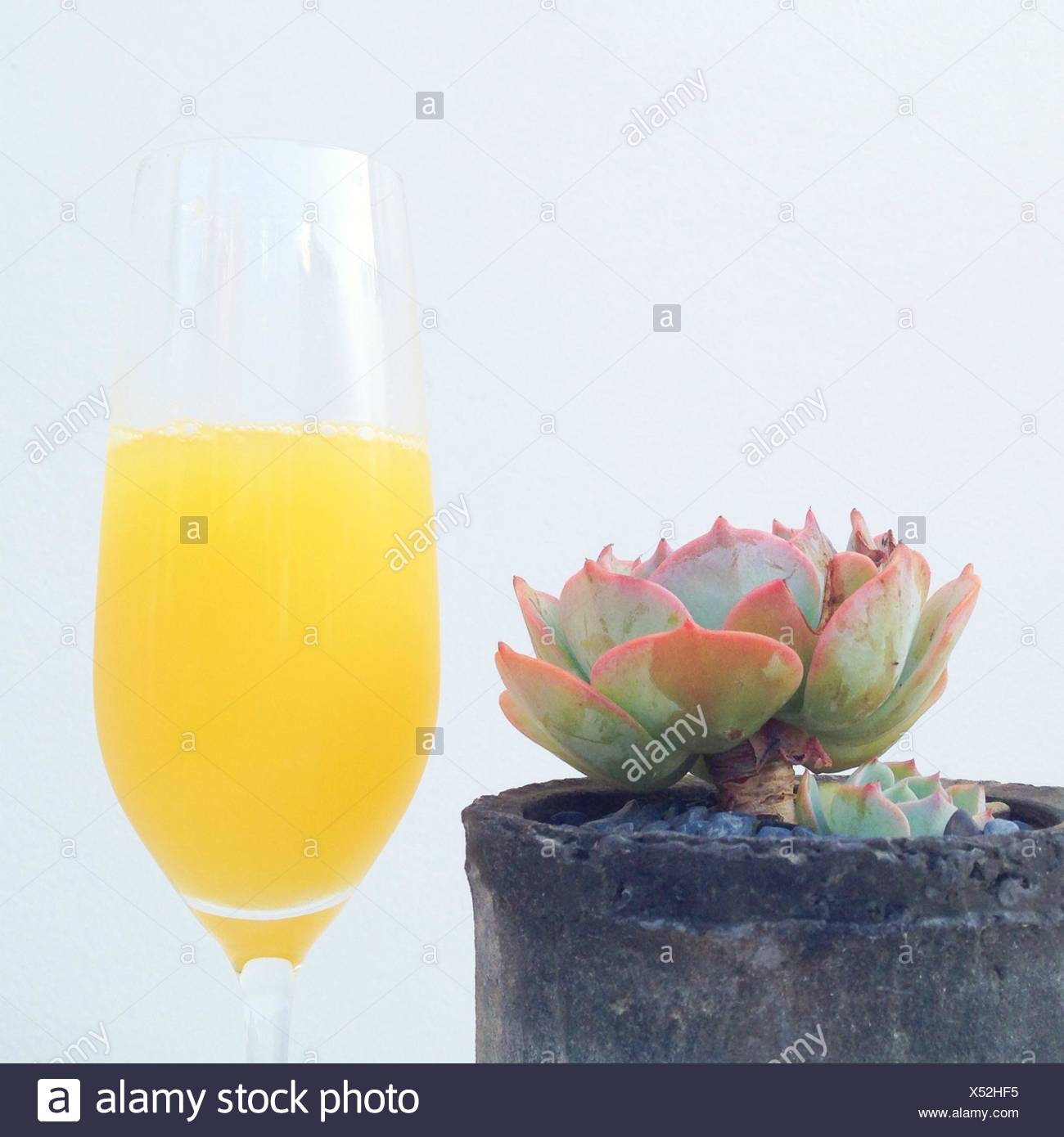 Potted plant and orange juice in champaign flute - Stock Image