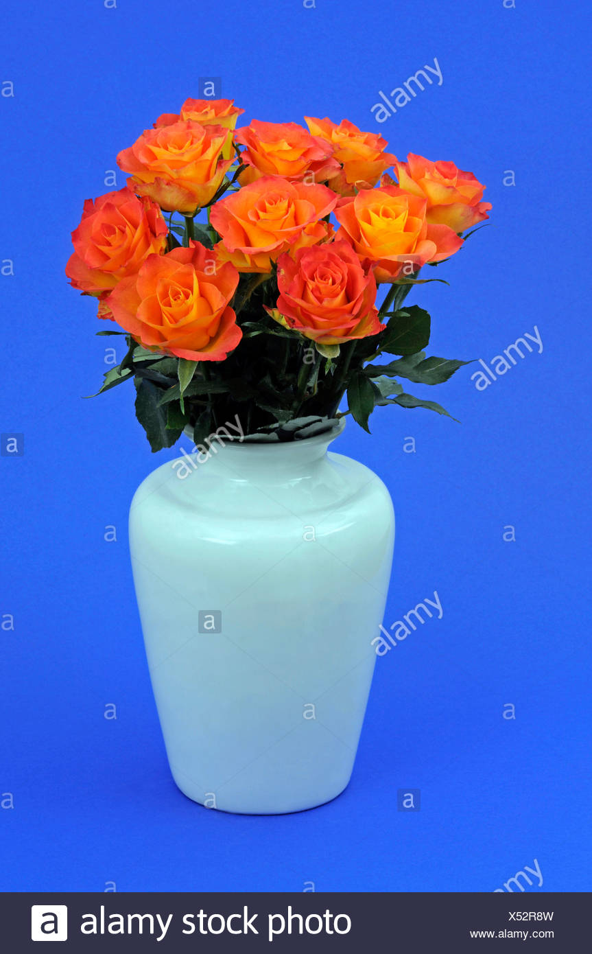 Bouquet of roses in a vase Stock Photo