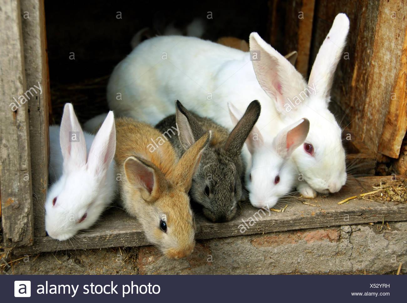 Bunny Rabbits family - Stock Image