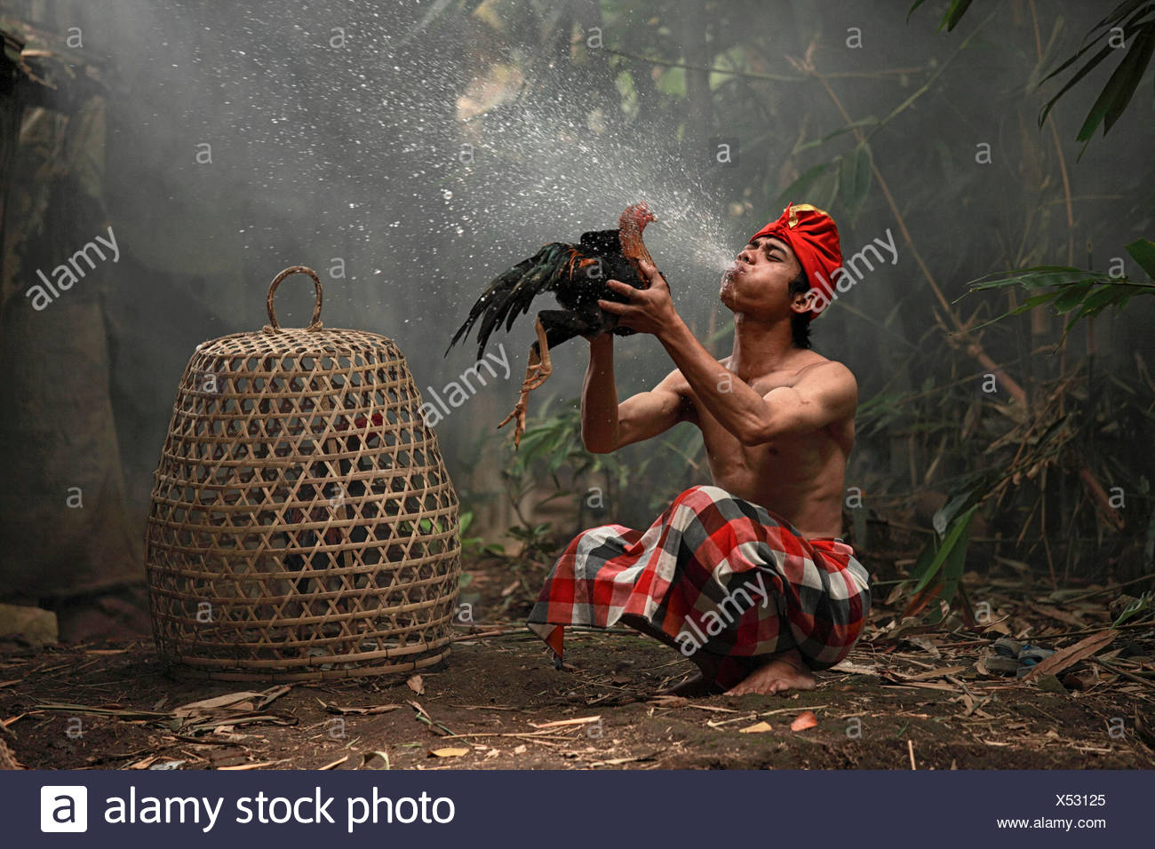 Indonesia, Jember, Man spraying chicken for chickens fight - Stock Image
