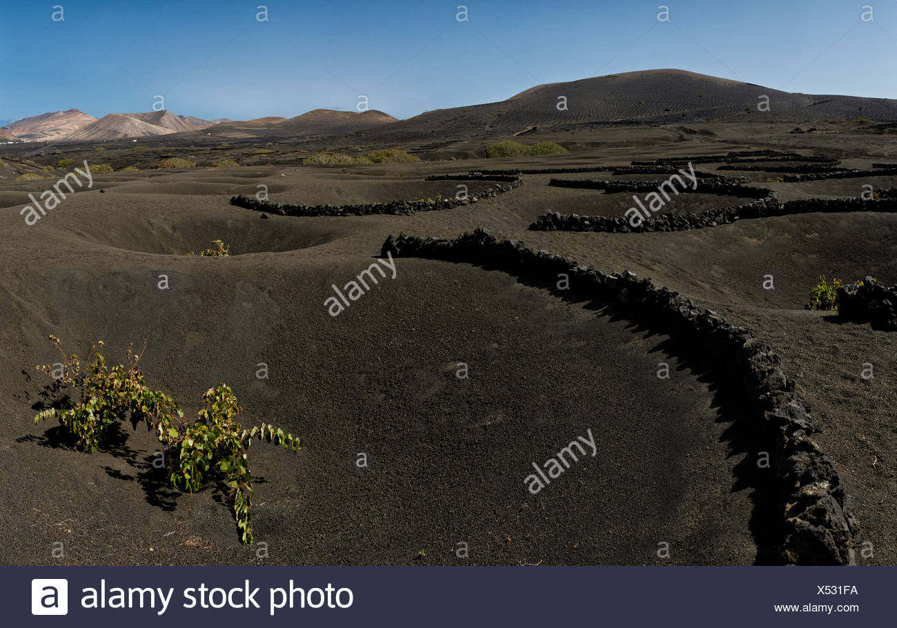 Spain, Lanzarote, La Geria, Vineyard, bushes, lava pits, landscape, summer, mountains, hills, Canary Islands, - Stock Image