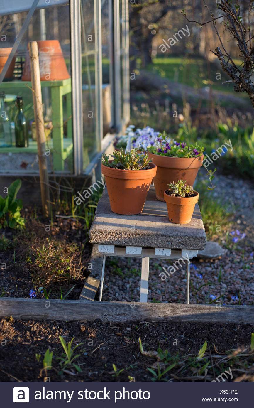 Potted plants in garden - Stock Image