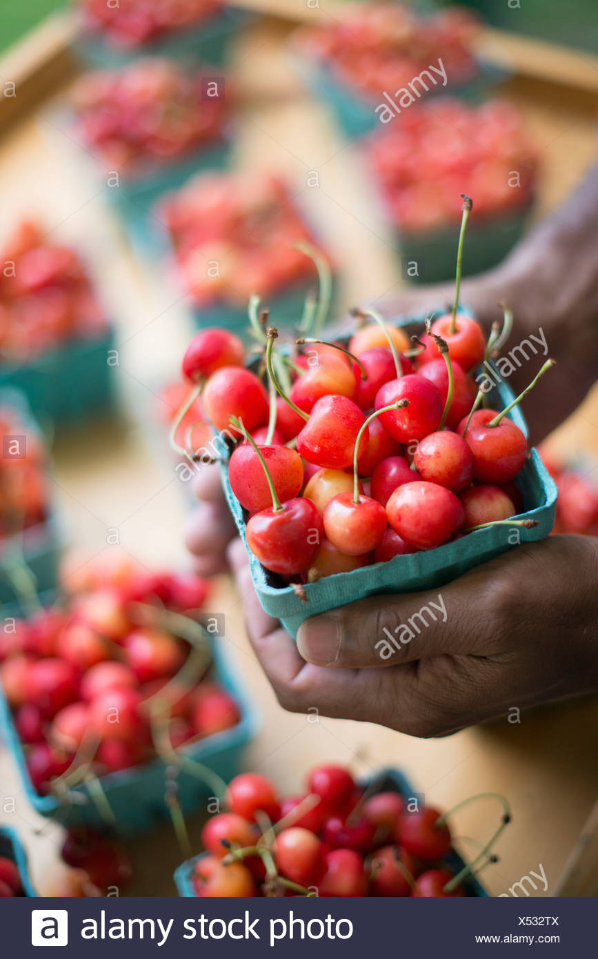 Organic fruit displayed on a farm stand. Cherries in punnets. - Stock Image