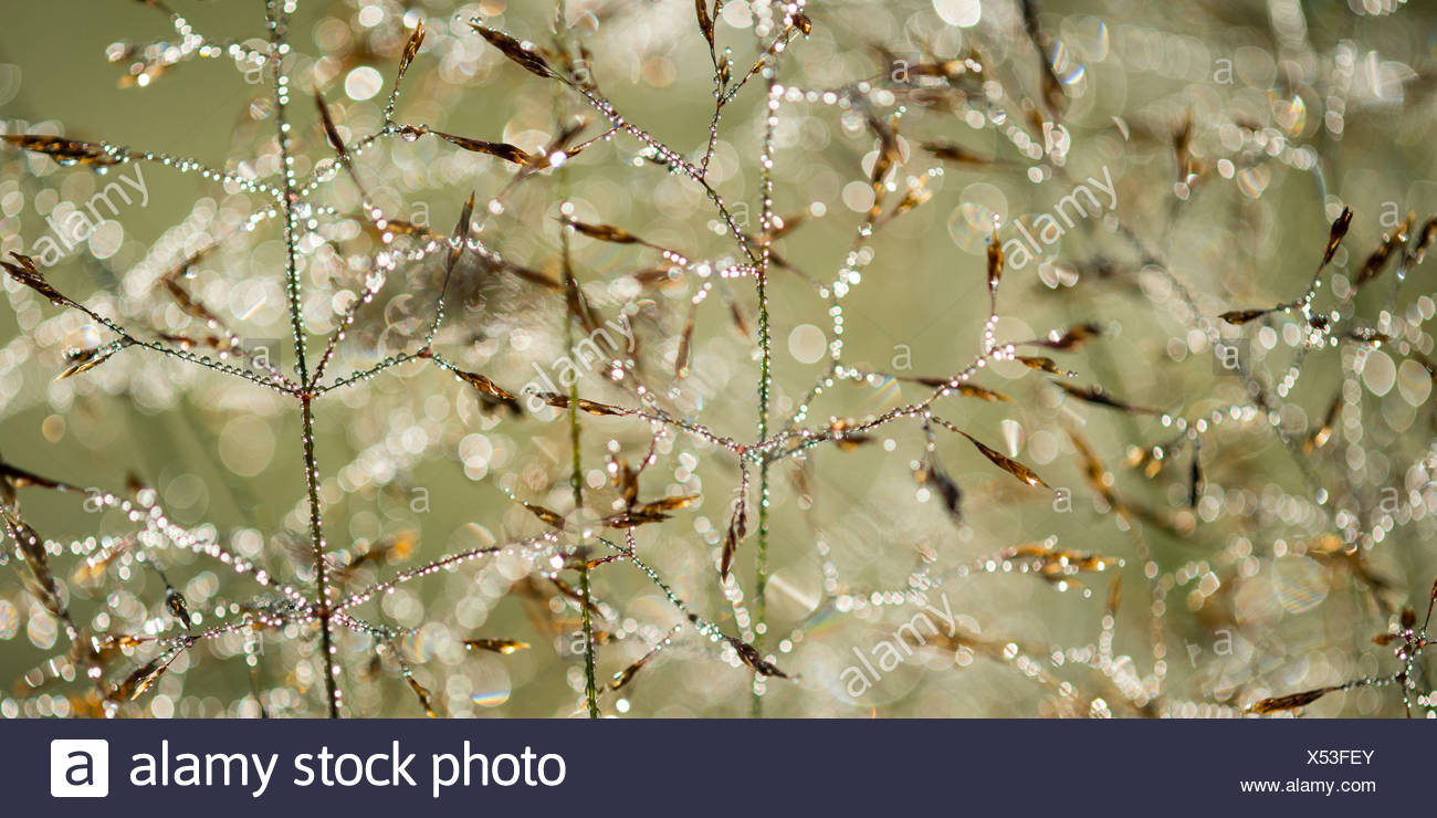 dew drops in backlight - Stock Image