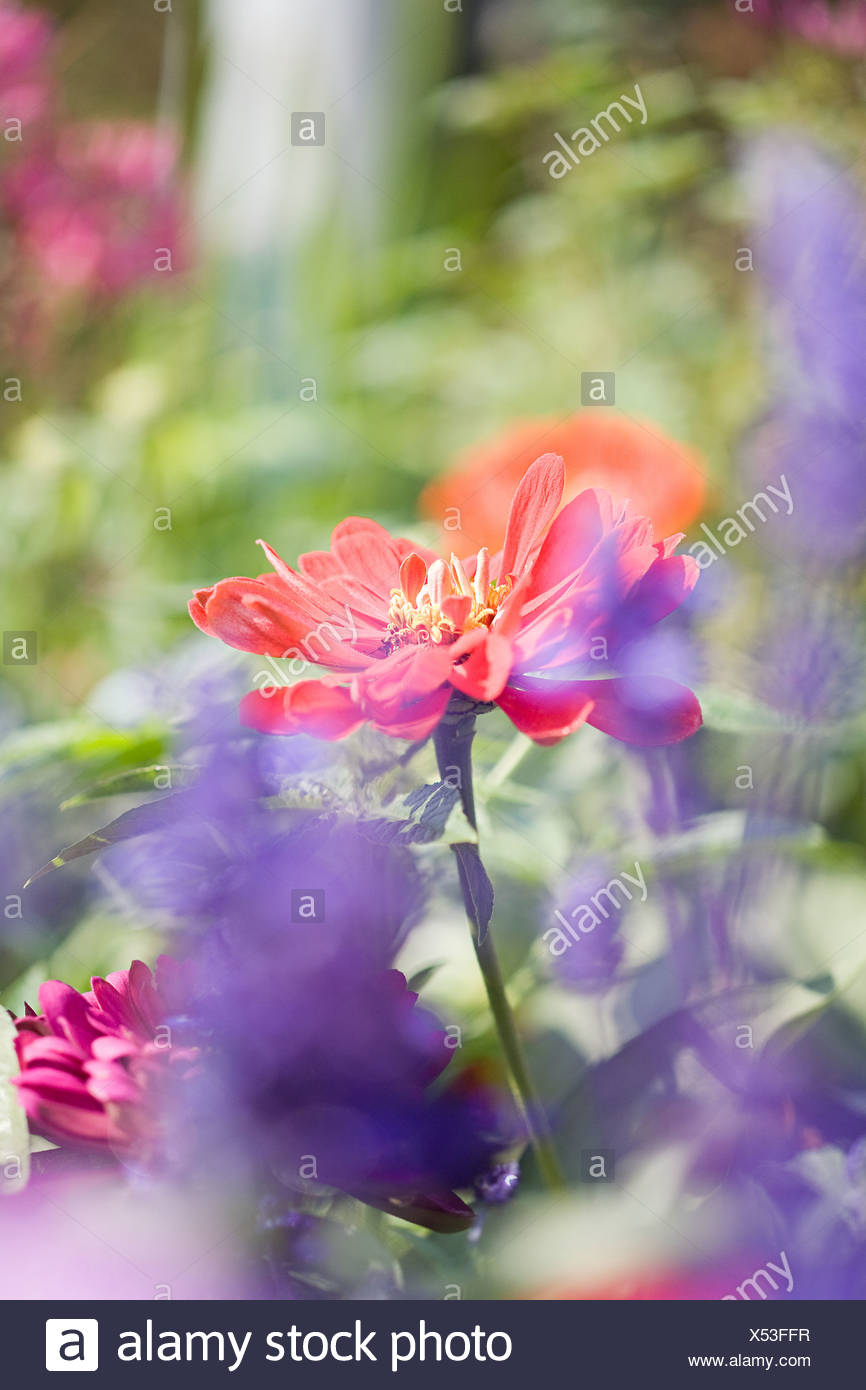 Close up of flowers - Stock Image