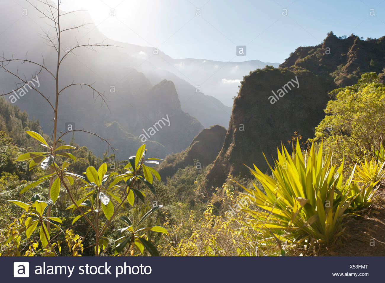 Mystical misty mountain landscape, with agave in the foreground, Cilaos, Cirque de Cilaos, French Overseas Territory - Stock Image
