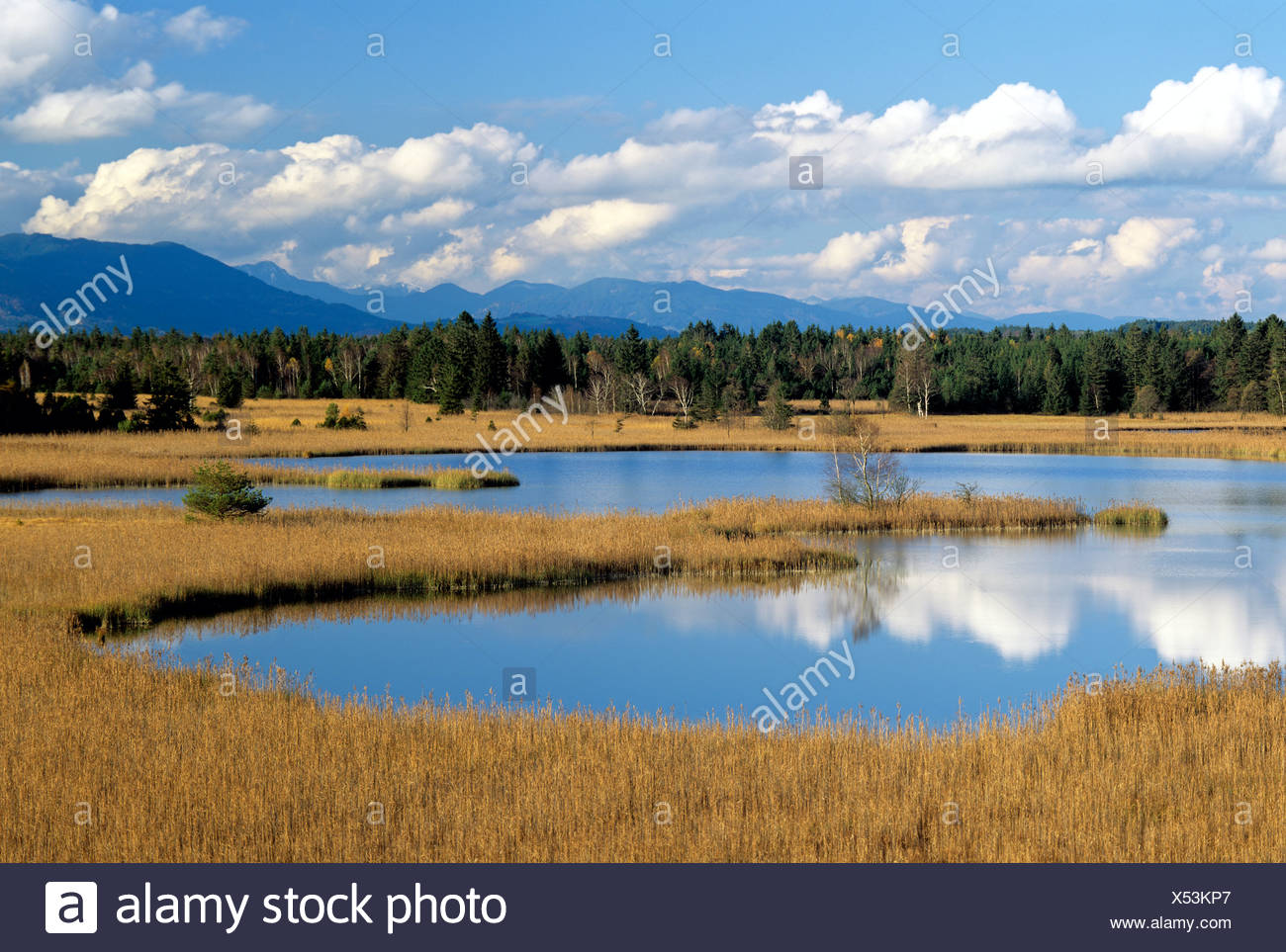 Grosser Gartensee lake, Osterseen lakes in Seeshaupt, Upper Bavaria, Bavaria, Germany, Europe Stock Photo