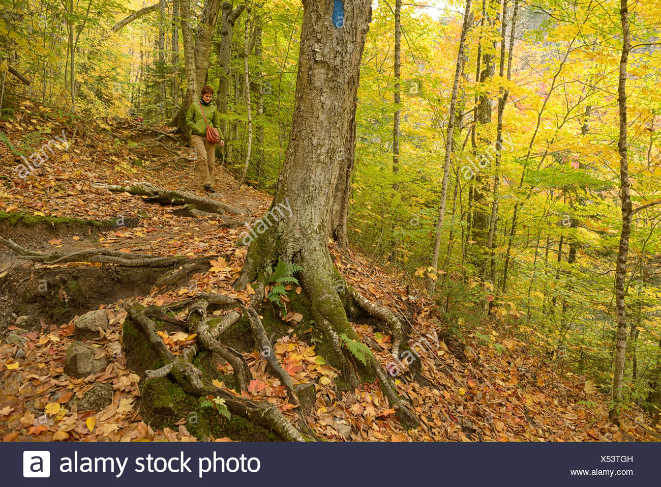USA, United States, America, New Hampshire, Crawford Notch, North America, New England, East Coast, Coos County, Indian Summer, Stock Photo