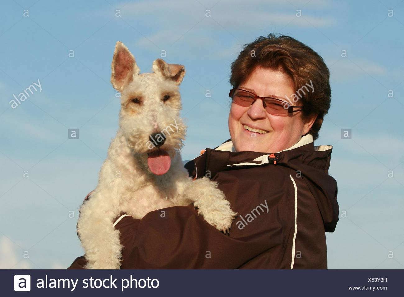 Pedigree Fox Terrier Stock Photos & Pedigree Fox Terrier Stock ...
