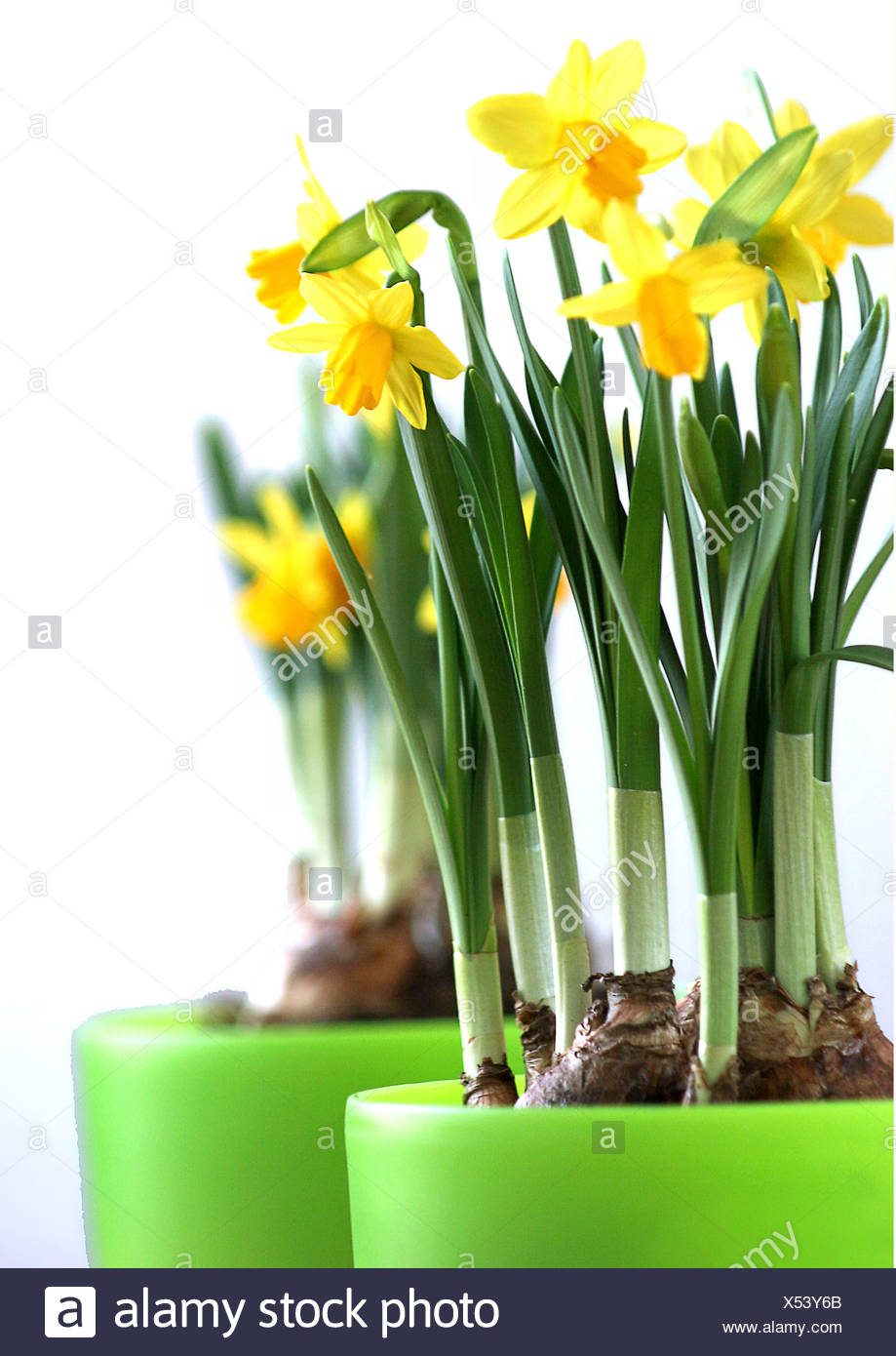 bloom blossom flourish Stock Photo