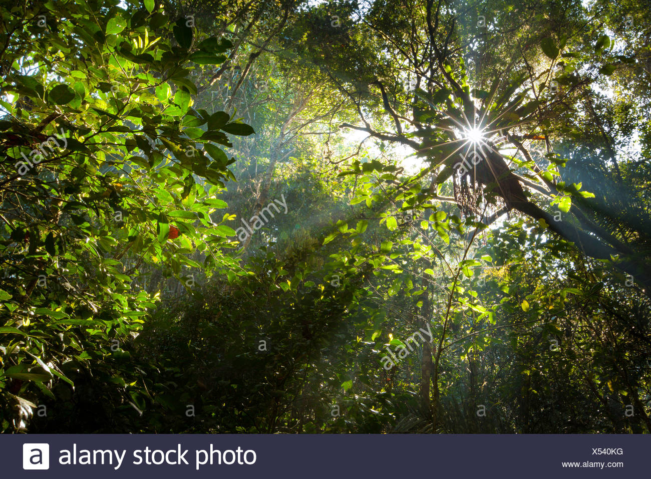 Early morning sun creating sunbeams through the humid rainforest canopy, Andasibe-Mantadia National Park, Madagascar. Stock Photo
