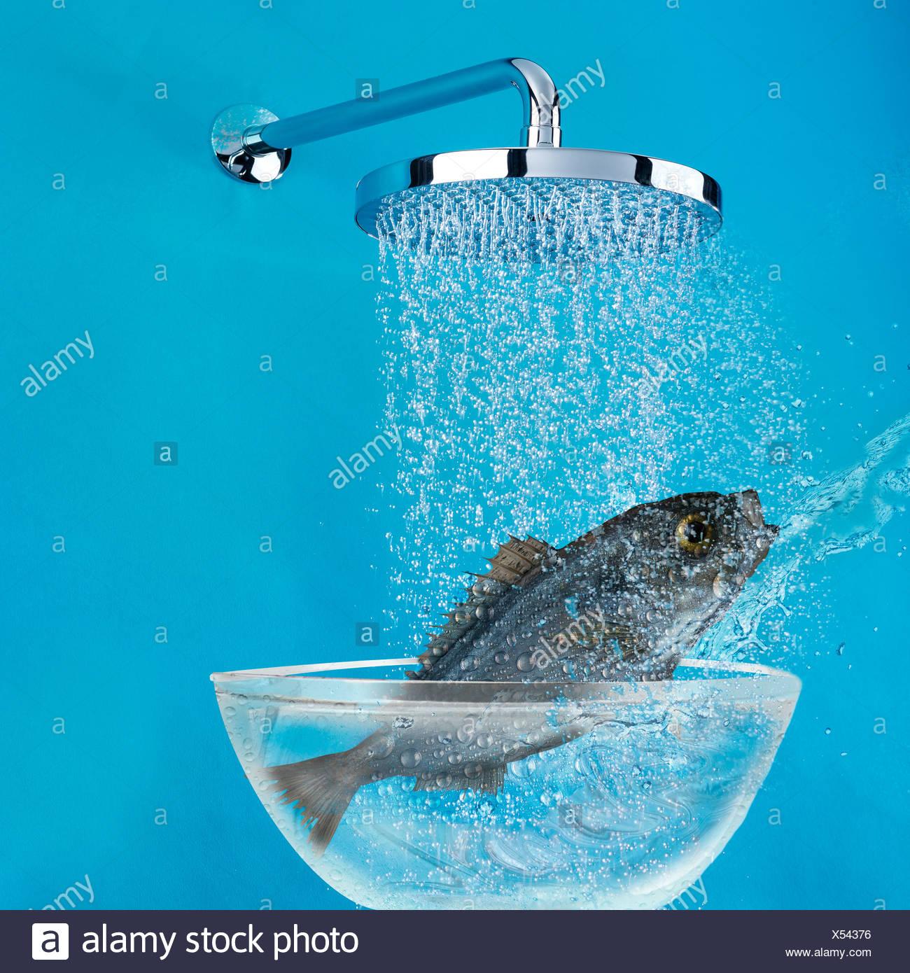 Fish under shower - Stock Image