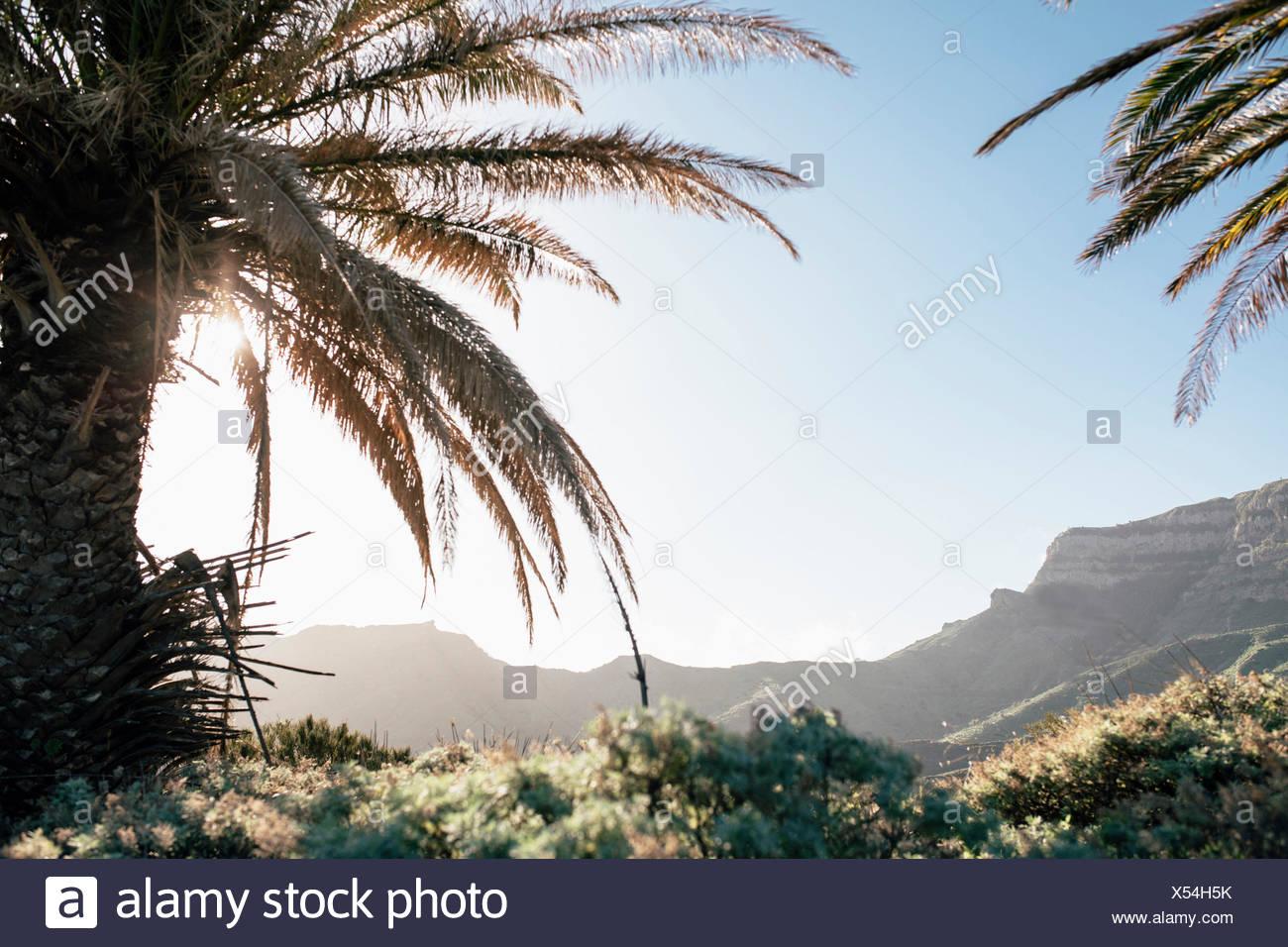Sun shines between palm trees on La Gomera - Stock Image