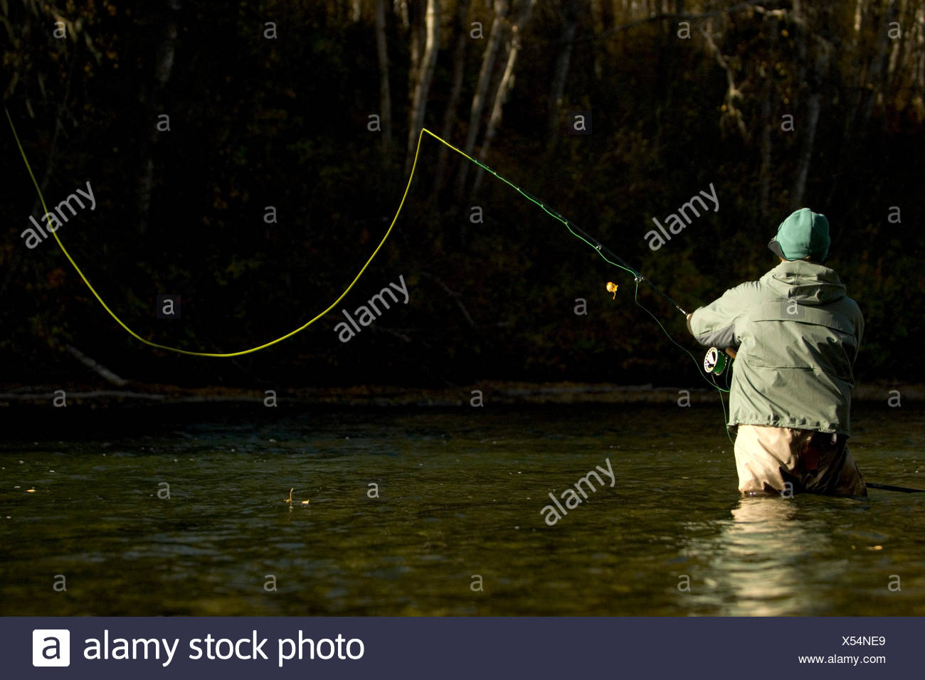 A sport fisherman fly fishing for steelhead trout in the Bulkley River. - Stock Image