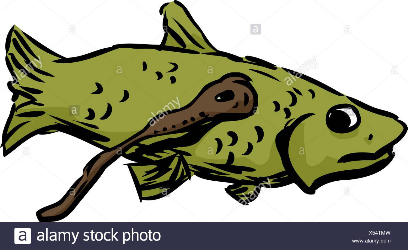 Lamprey Eel Fish Attached Nervous Stock Photos Lamprey Eel Fish