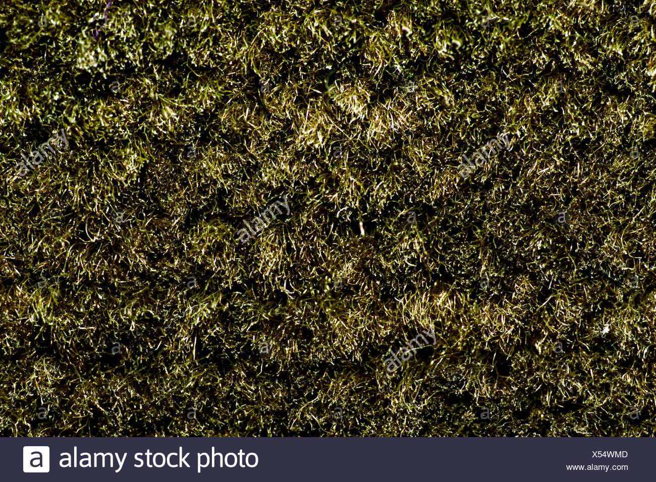 texture of brown carpet with long pile - Stock Image