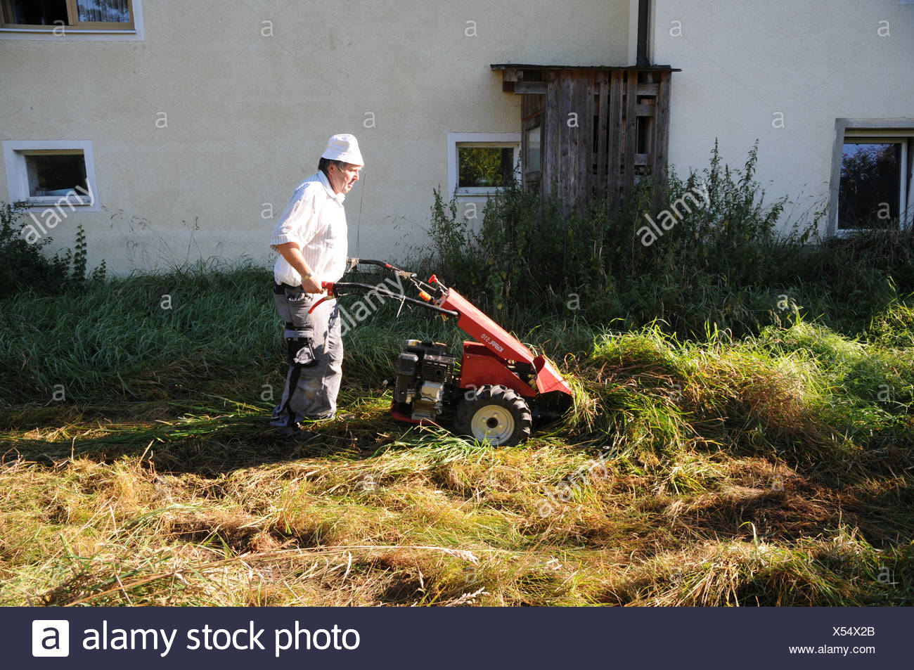meadow mowing with sickle bar mower Stock Photo: 278547427 - Alamy