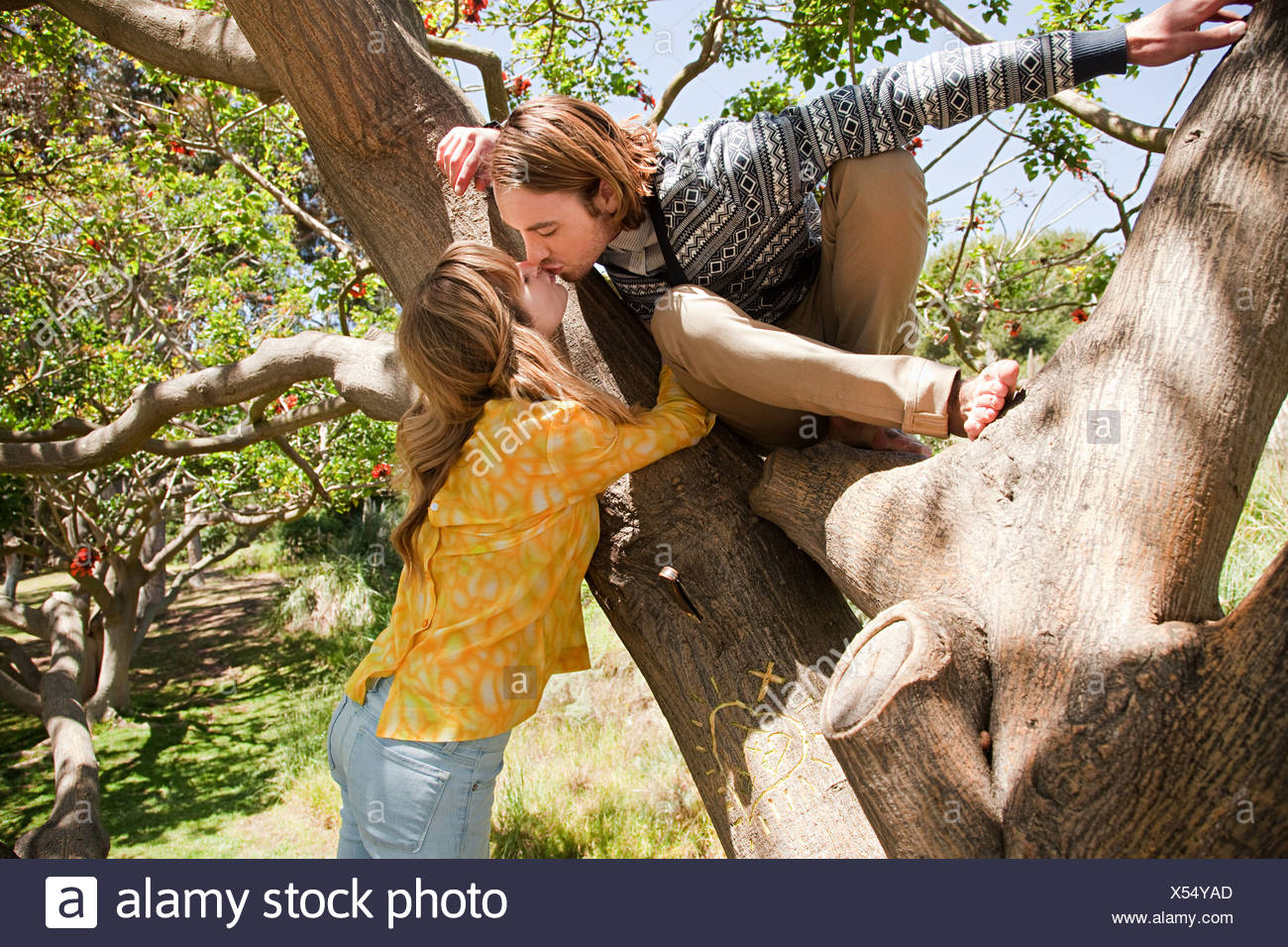 Man in tree leaning to kiss girlfriend - Stock Image