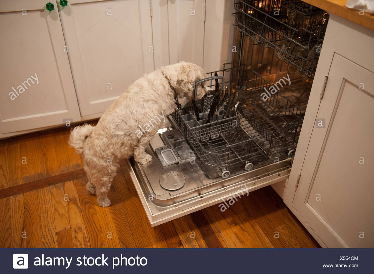 Dirty Dishes Dishwasher Stock Photos & Dirty Dishes ...