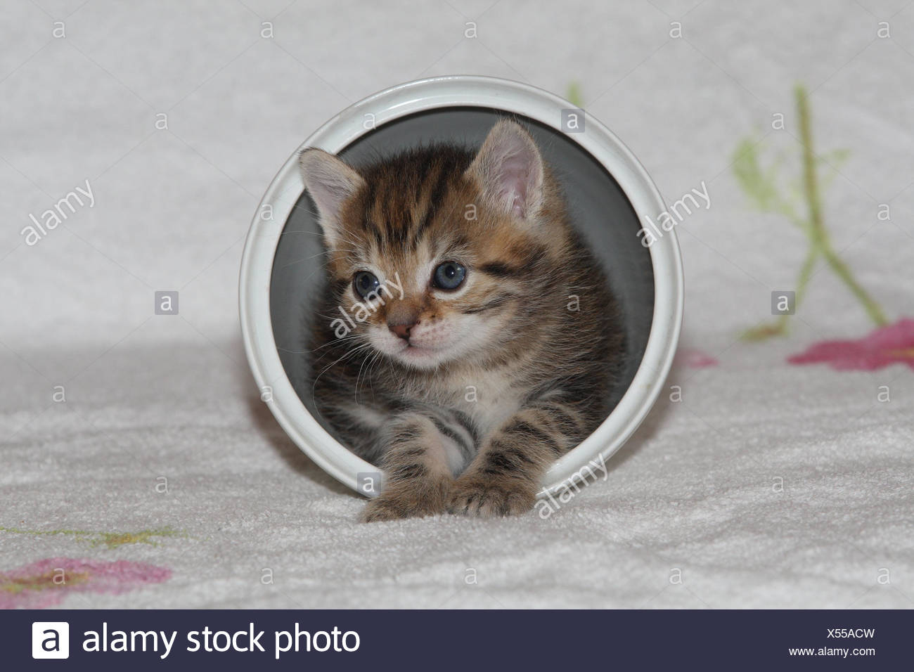 Pot, cat, young, herauskrabbeln, bed, animals, mammals, pets, small cats, Felidae, domesticates, house cat, young animal, kitten, small, awkward, clumsy, creep, creep, curiosity, hiding place, play, hide, sweetly, individually, only, striped, tin, bowl, young animals, animal baby, inside, - Stock Image