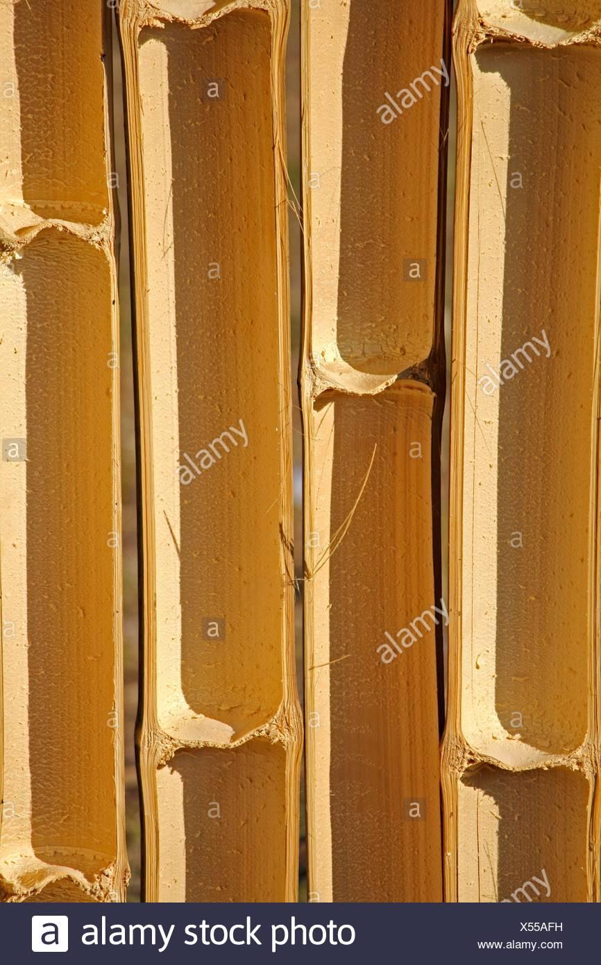 Bamboo Section, Half Cut, India Stock Photo: 278557205 - Alamy
