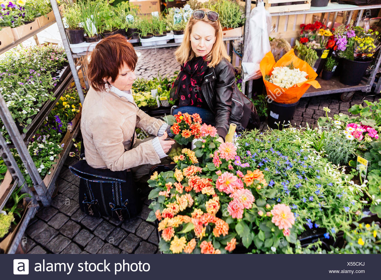 Mature women buying flower plants in market - Stock Image