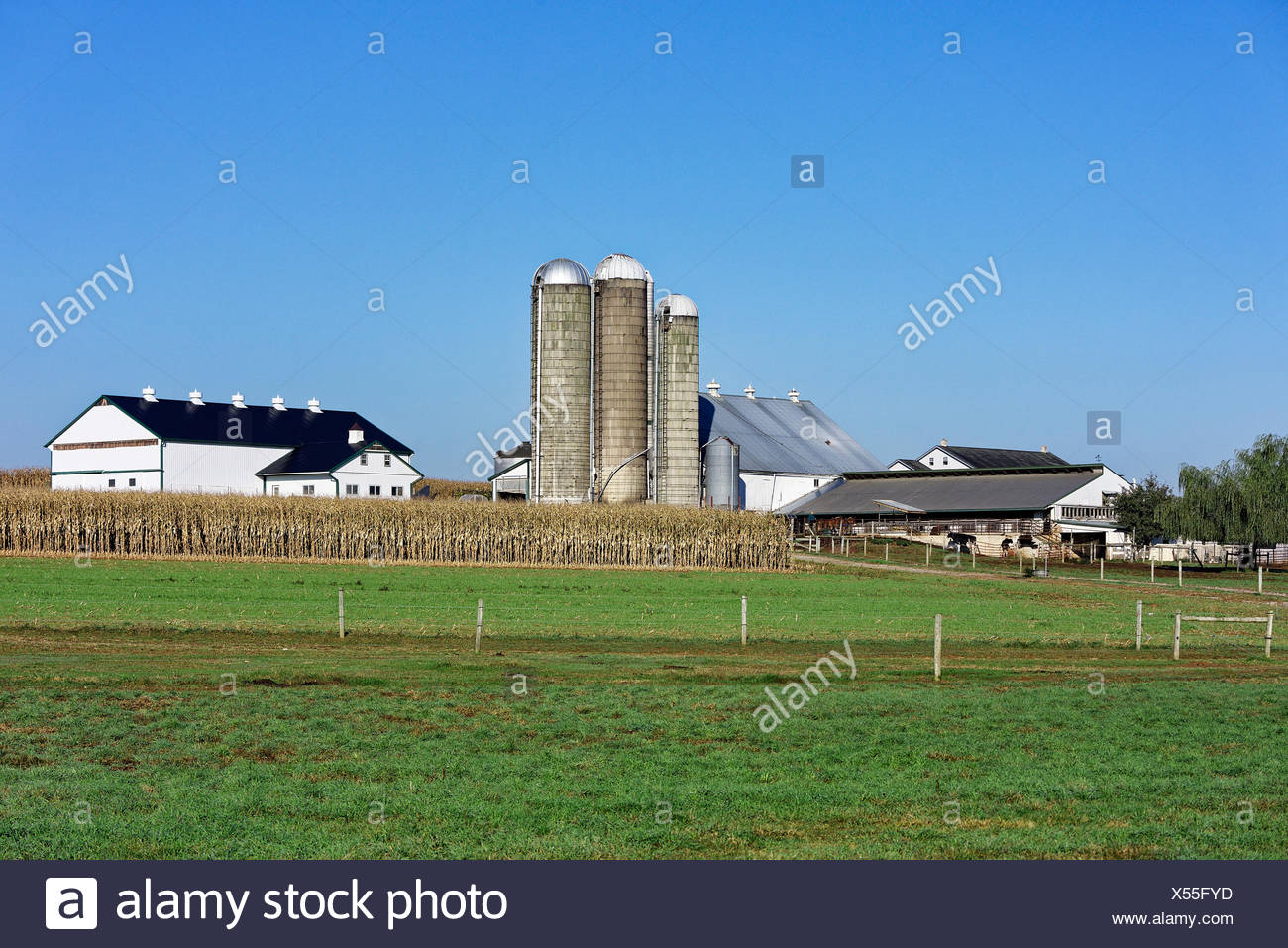 Amish farm, New Holland, Lancaster, Pennsylvania, USA - Stock Image