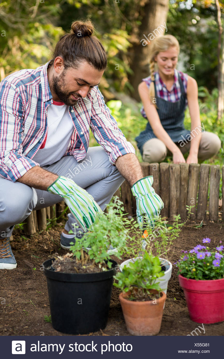 Male gardener planting with colleague at garden - Stock Image