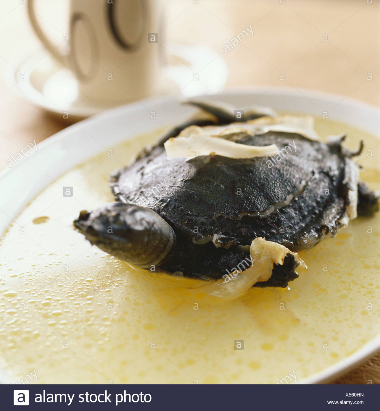 Cooked turtle with Tian ma - Stock Image