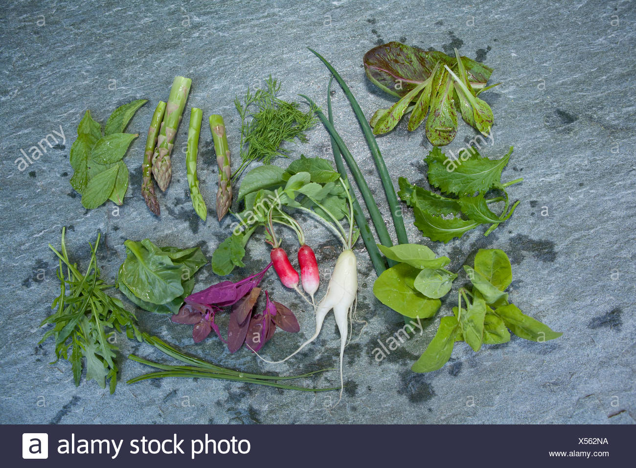 Vegetables, salads, lettuces, Hospezi, Trun, agriculture, canton, GR, Graubünden, Grisons, Switzerland, Europe, healthy, eat, Fo - Stock Image