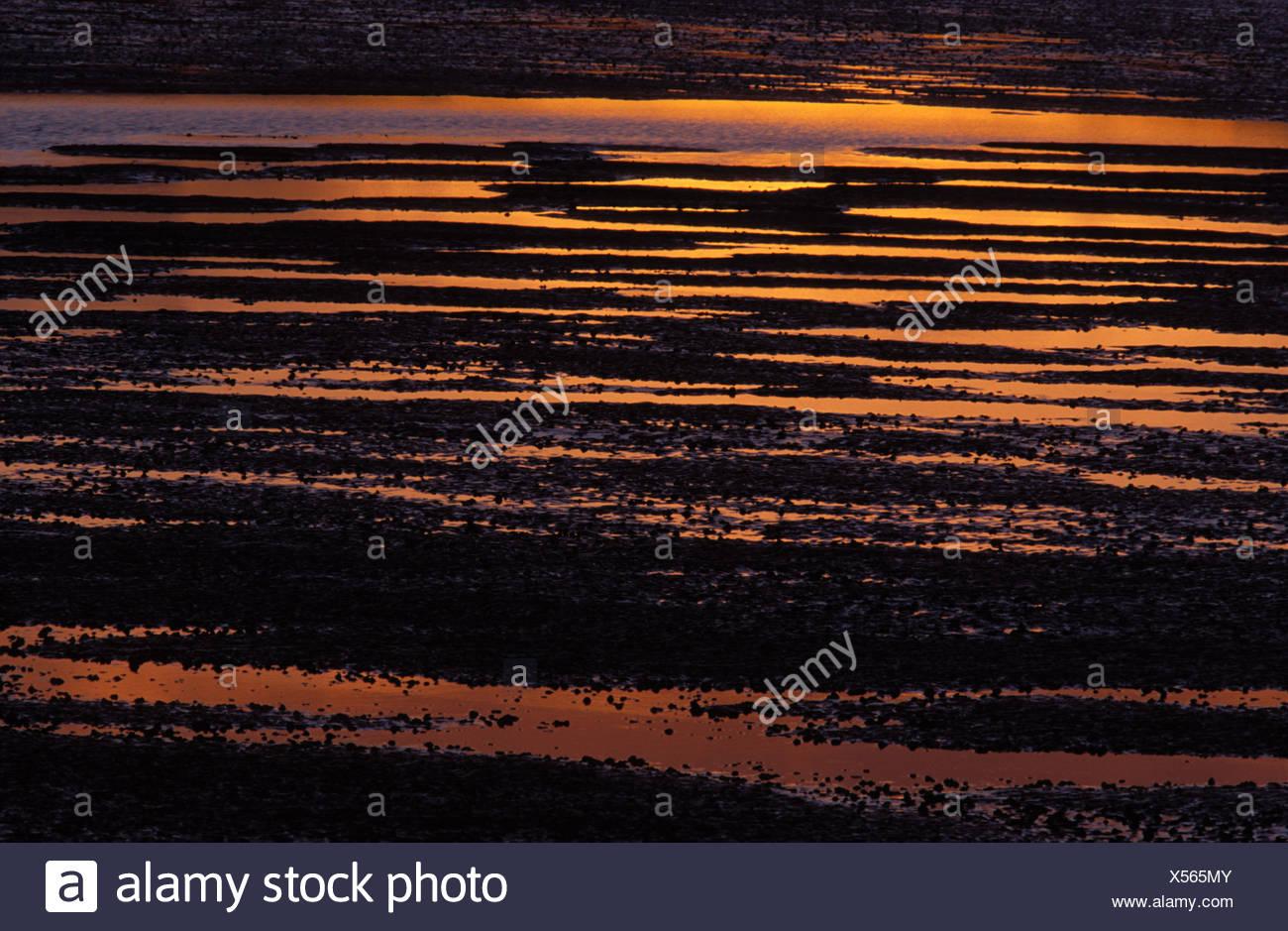 Sunset reflected in the estuarine mud Morecambe Bay Silverdale Lancashire - Stock Image
