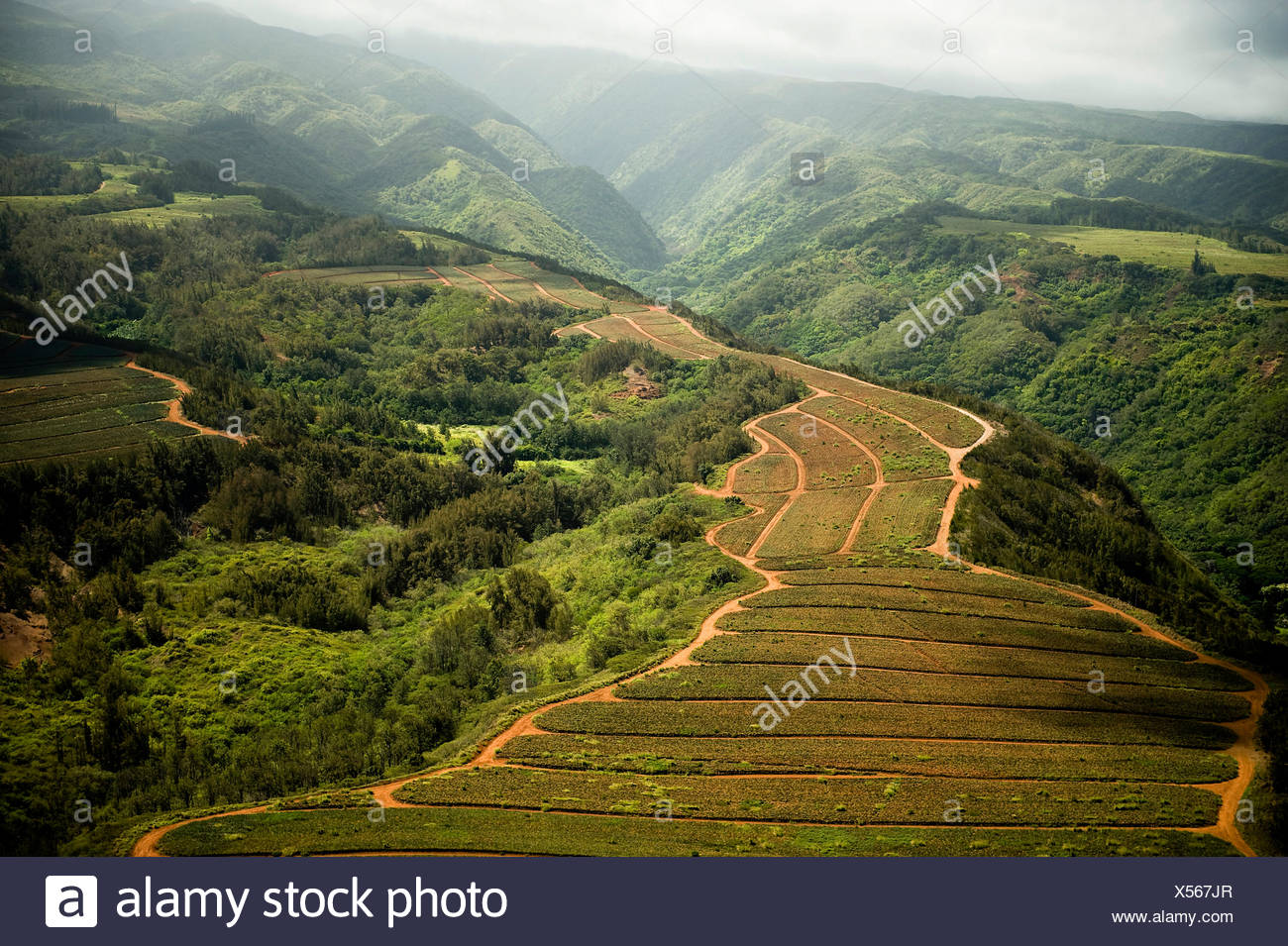 The sun shines on the hilltops of Maui, Hawaii. Farm fields and foliage over grow the mountainside rocks. - Stock Image