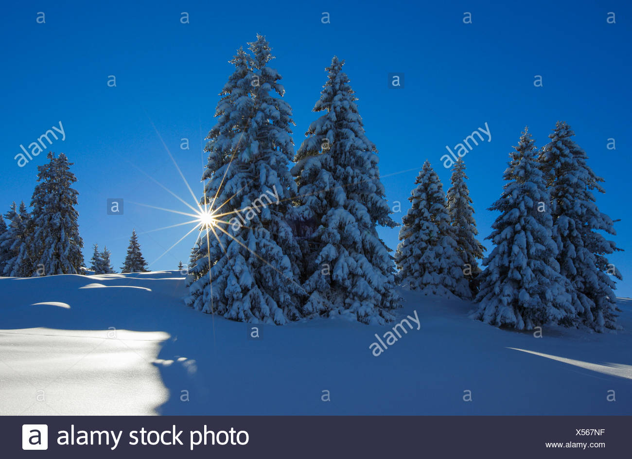 Tree, trees, spruce, spruces, Flumserberge, Flums mountain, mountains, back light, Heidiland, sky, snow, Switzerland, Europe, Swi - Stock Image