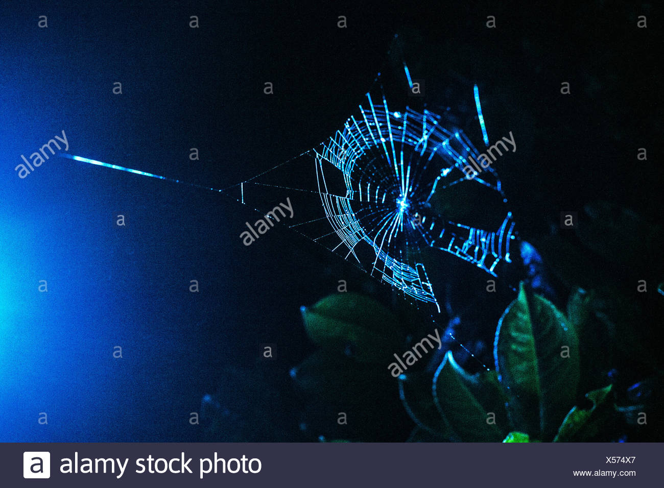 Low Angle View Of Spider Web On Plant At Night - Stock Image