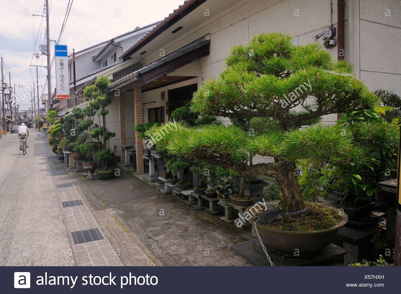 Large privately owned Bonsai garden in Sasayama, Japan, Asia Stock Photo