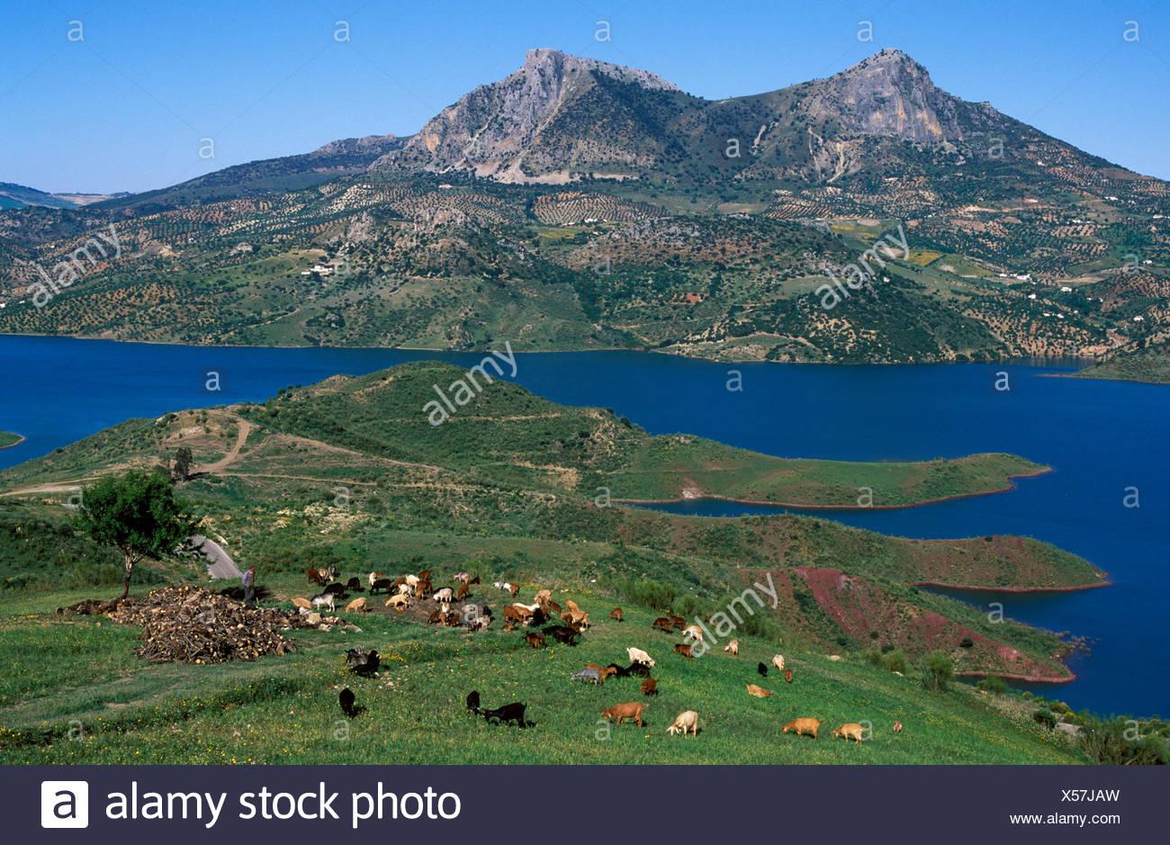 Embalse de Zahara, reservoir in the Sierra de Grazalema, Cádiz Province, Andalusia, Spain Stock Photo