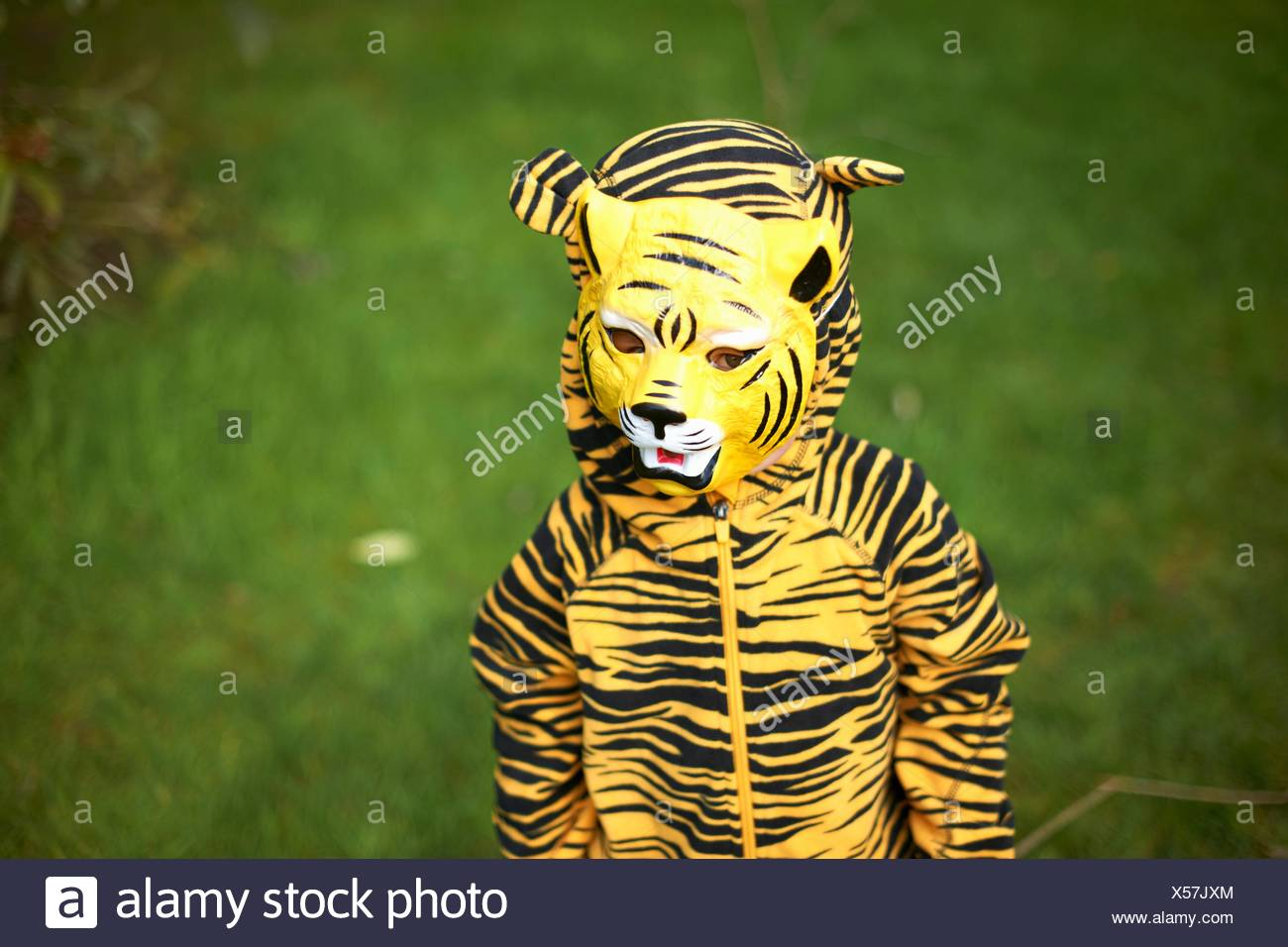 Young child dressed as tiger - Stock Image