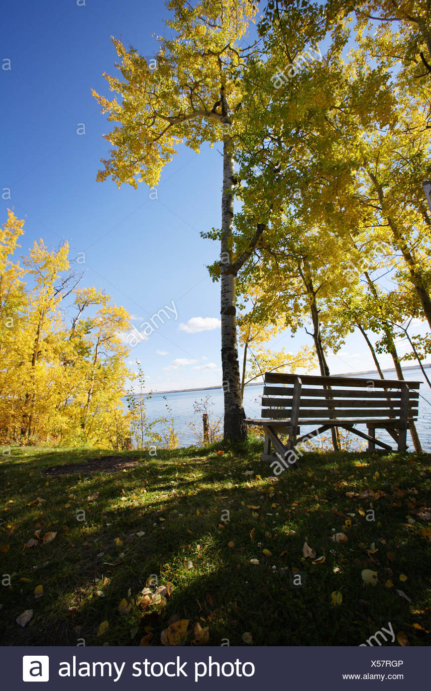 Park bench beside a lake in fall - Stock Image