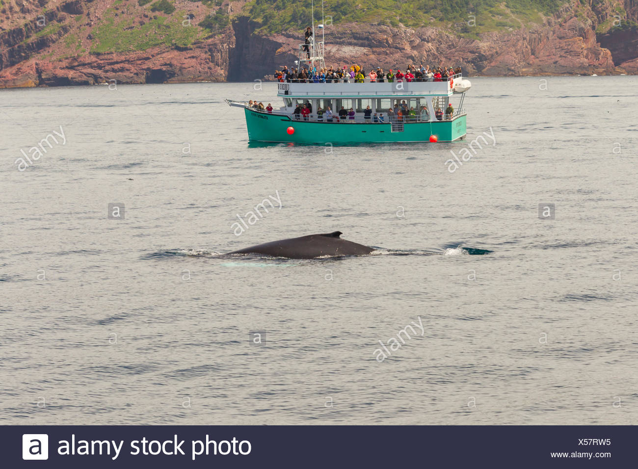 Humpback Whale, (Megaptera novaeangliae), and whale watchers, Witless Bay Ecological Reserve, Newfoundland, Canada Stock Photo