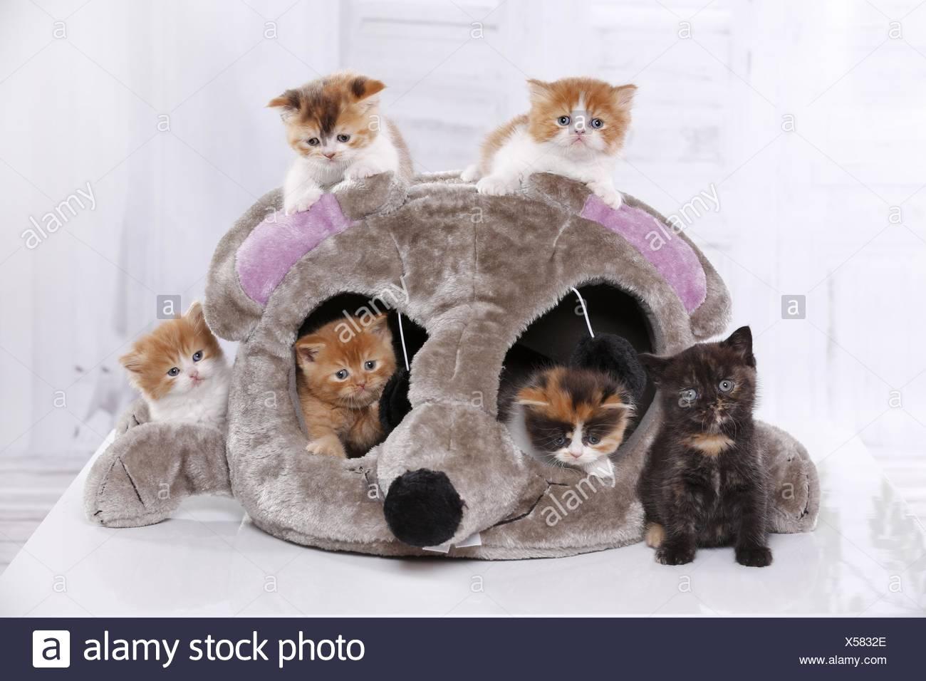6 Kitten Stock Photo