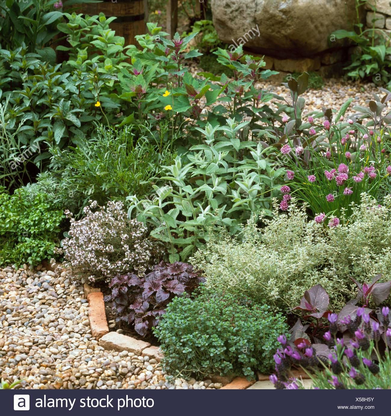 Etonnant Herbgarden Stock Photos U0026 Herbgarden Stock Images   Alamy