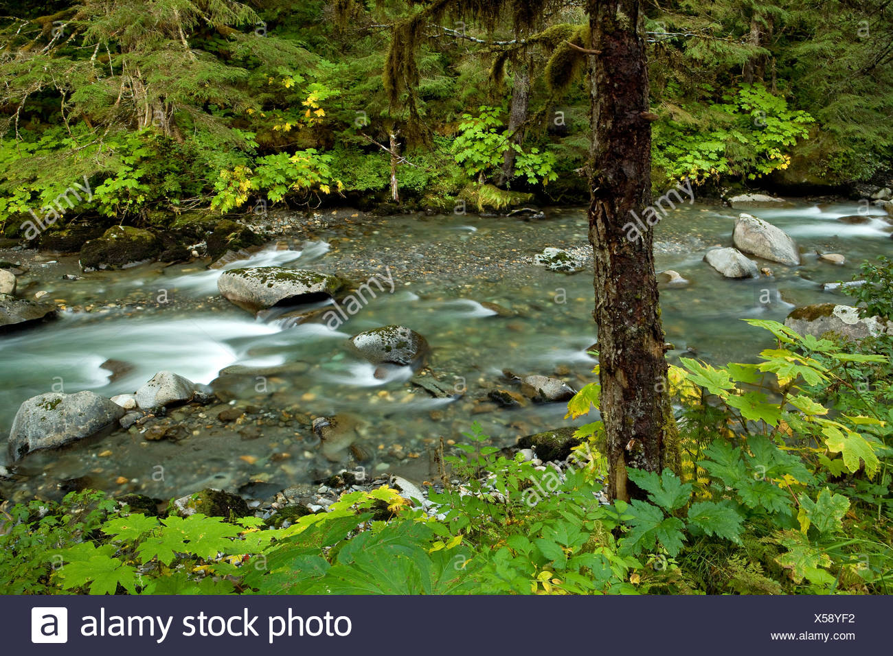 Small mountain stream in Tongass National Forest, Alaska - Stock Image