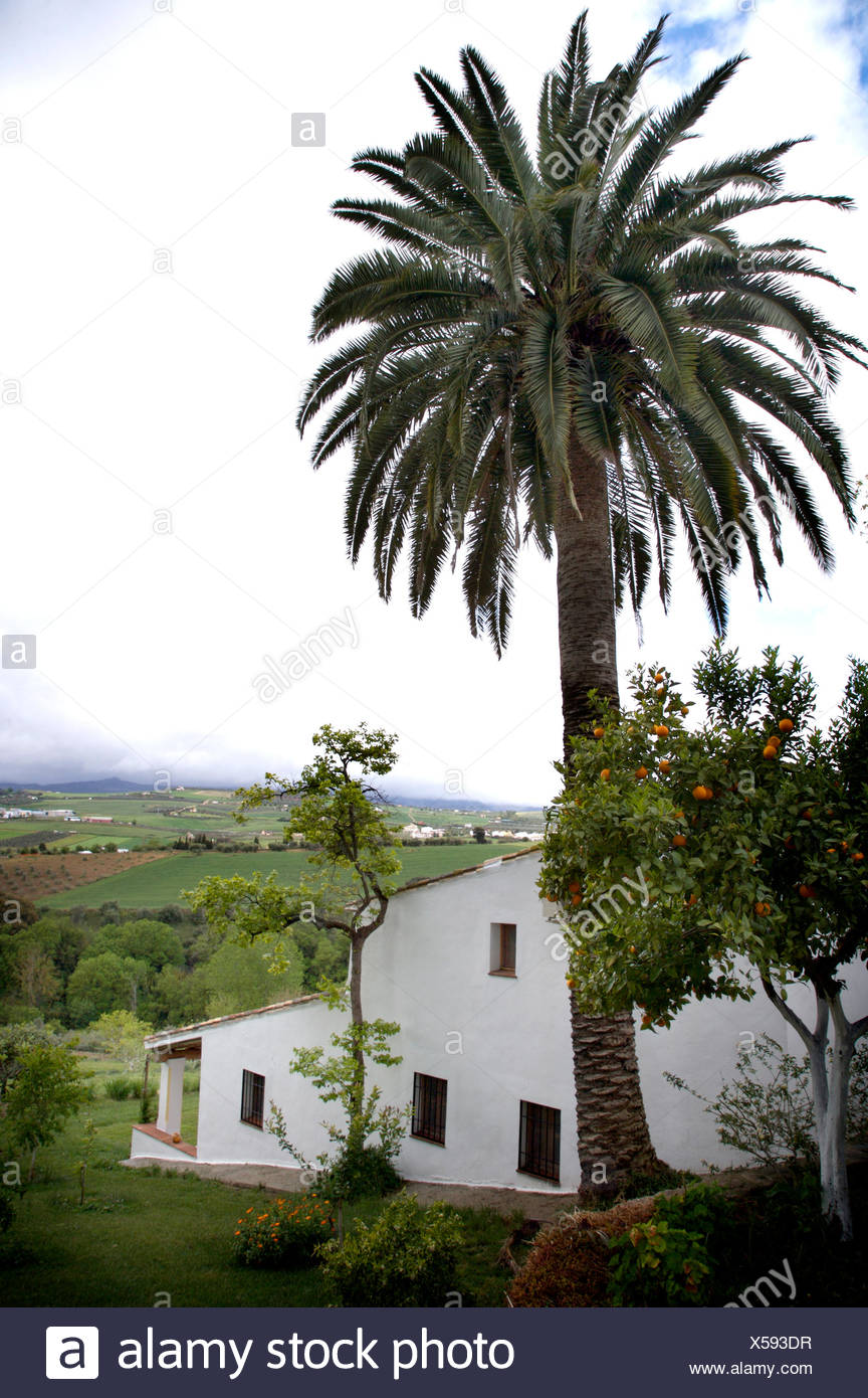 Tall palm tree beside traditional white Spanish villa in the country Stock Photo