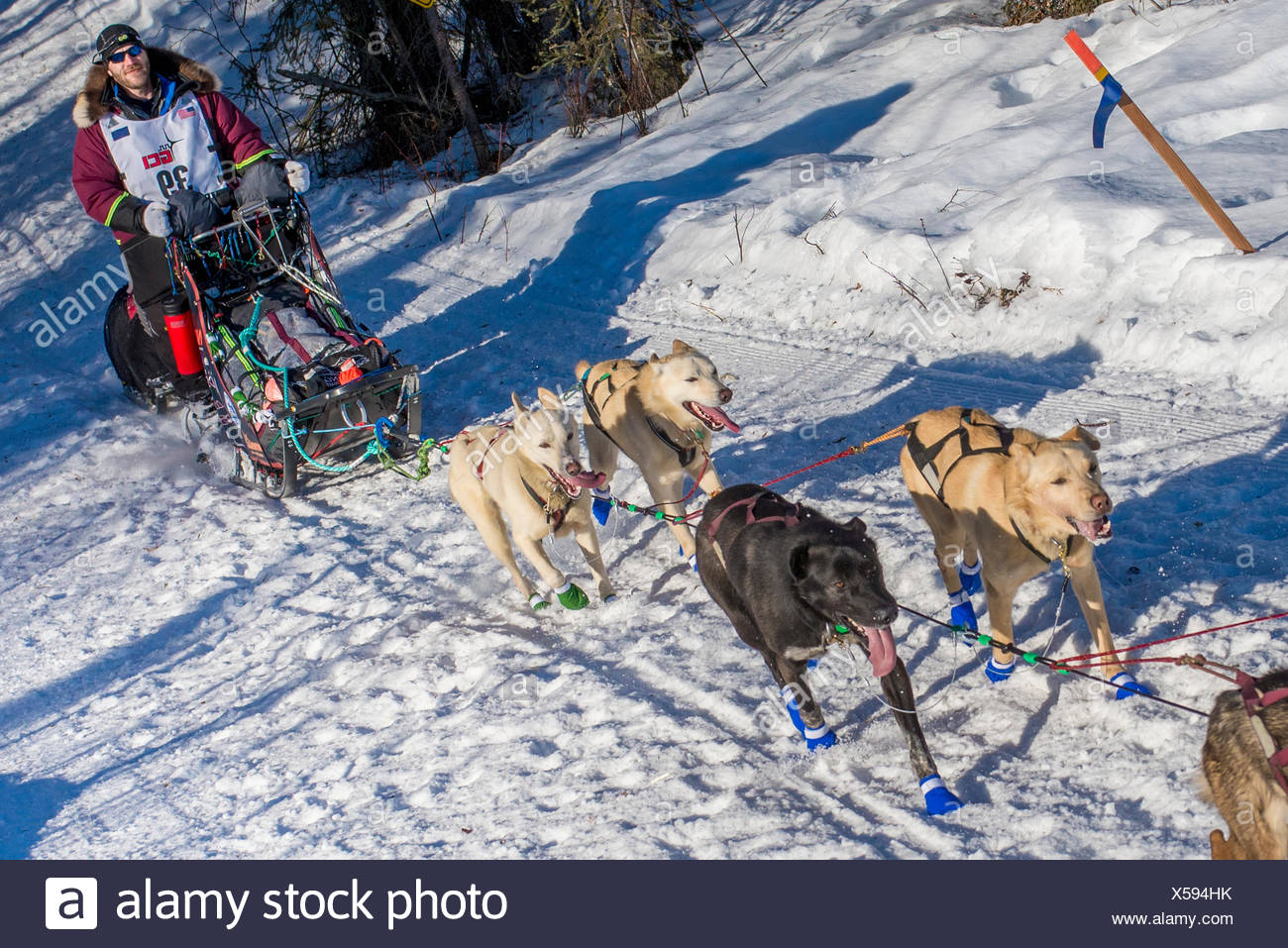 Noah Burmeister and team run down the trail on Long Lake shortly after leaving the re-start in Willow, Alaska during the 2016 Iditarod - Stock Image