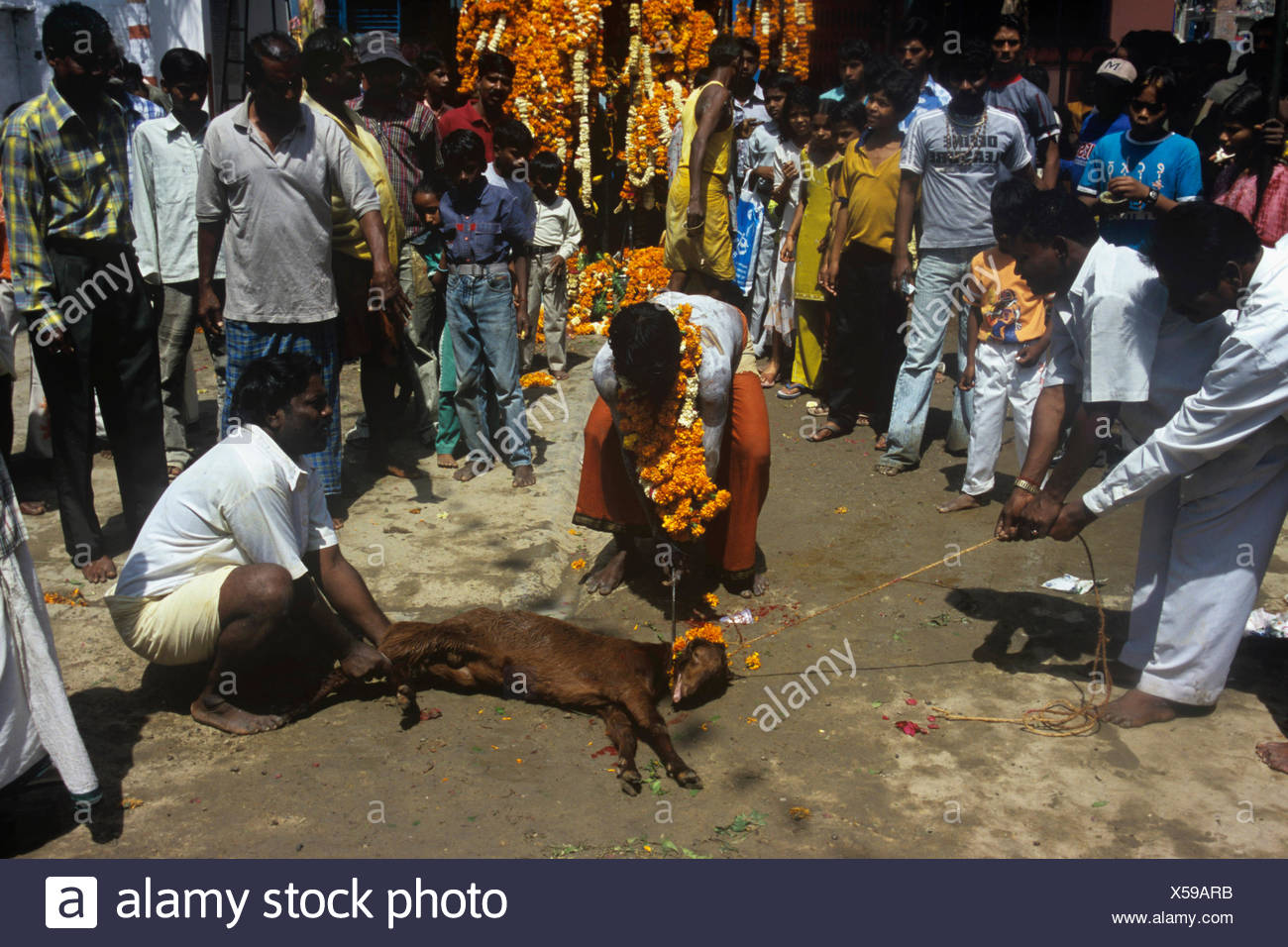 Devotees Sacrificing - Stock Image
